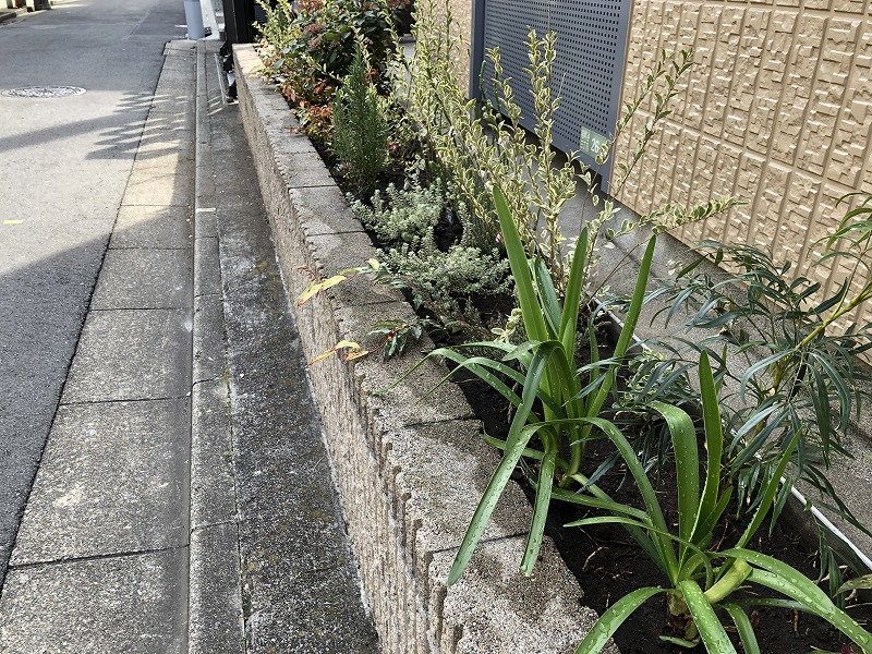 乾きに強い植物で植栽を行った世田谷区のマンション花壇