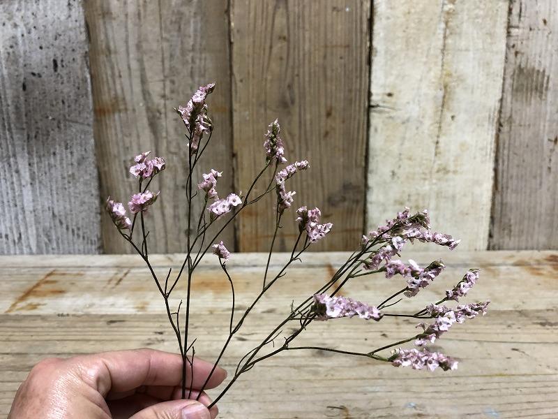 お花の定期便ブルーミーライフの入っていた花