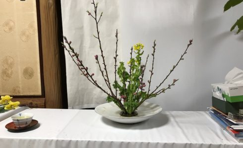 造園会社ぐりんぐりん横田がいけた池坊の自由花