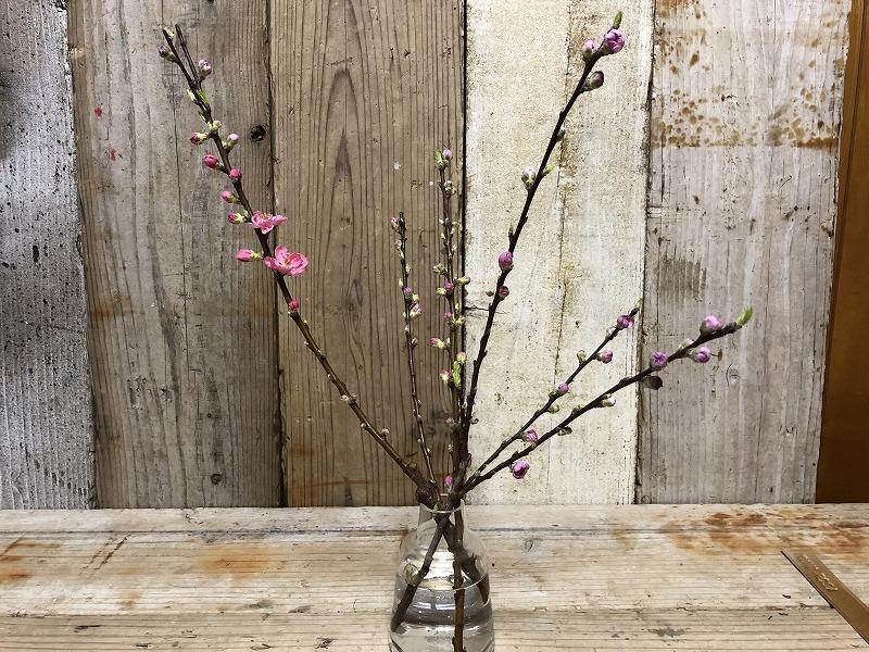 昨日生け花に使った桃の枝
