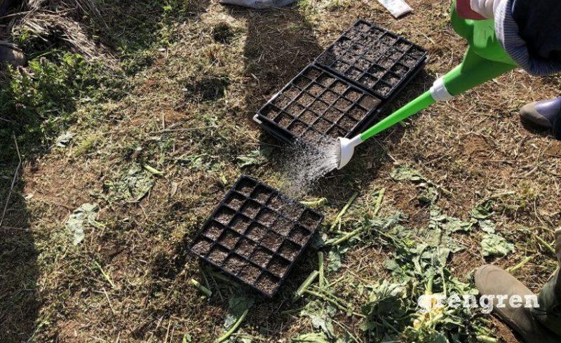 種まきをする前に苗床を濡らす作業
