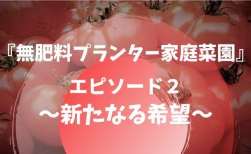 トマトの種が発芽しないので新しい種を蒔くサムネイル