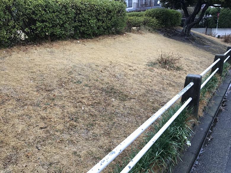 茶色になった芝生の横浜の公園