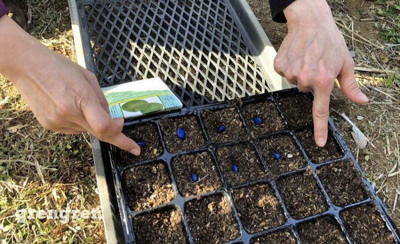 種を綺麗に蒔くことで強い発芽が得られる