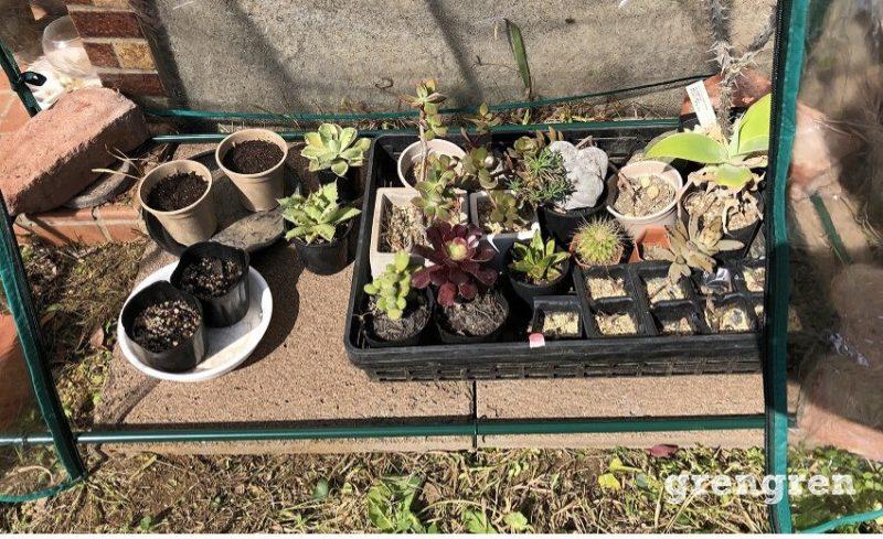 温室の中にサボテンとアガベと苗床をいれる