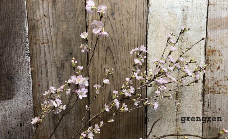 3月の池坊の生花の季節の花の啓翁桜一種生け