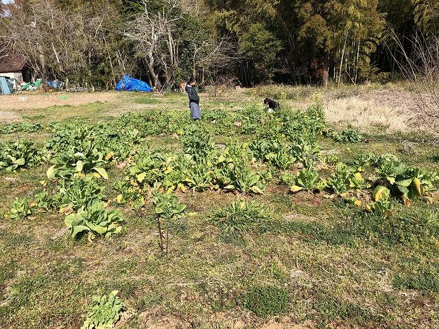 無肥料野菜栽培の実習を行う畑