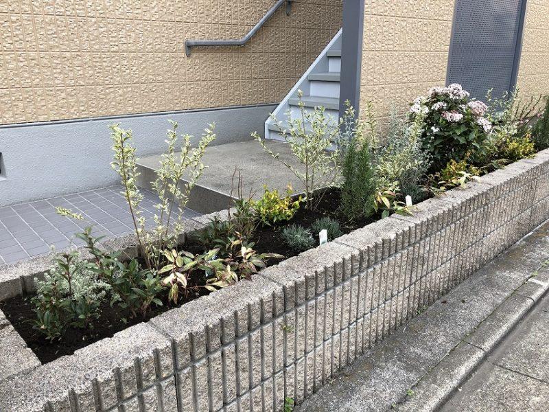 2月に植栽してから一カ月水やりうなしの花壇