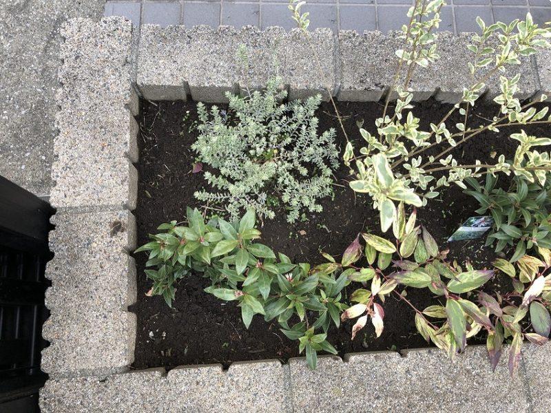雑草を撤去するなどのメンテナンスを行ったマンション花壇