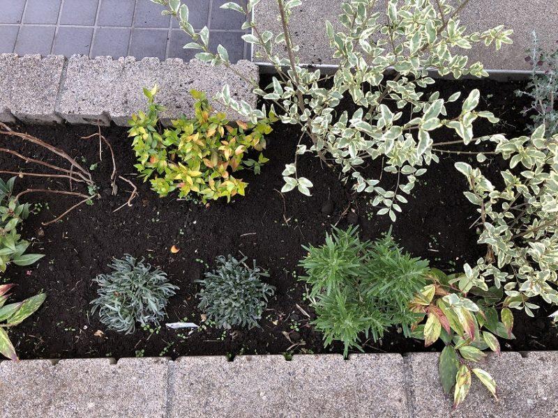 気温が低くで成長が見られない世田谷区のマンション花壇
