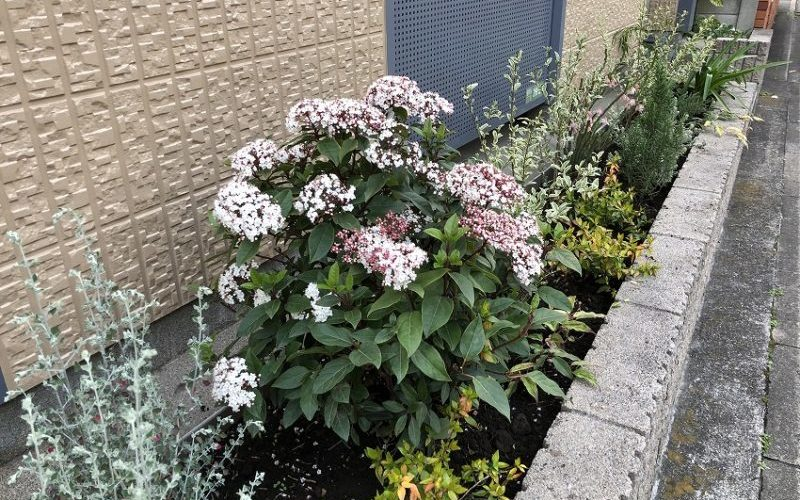 月に一回の花壇メンテナンスのマンション花壇