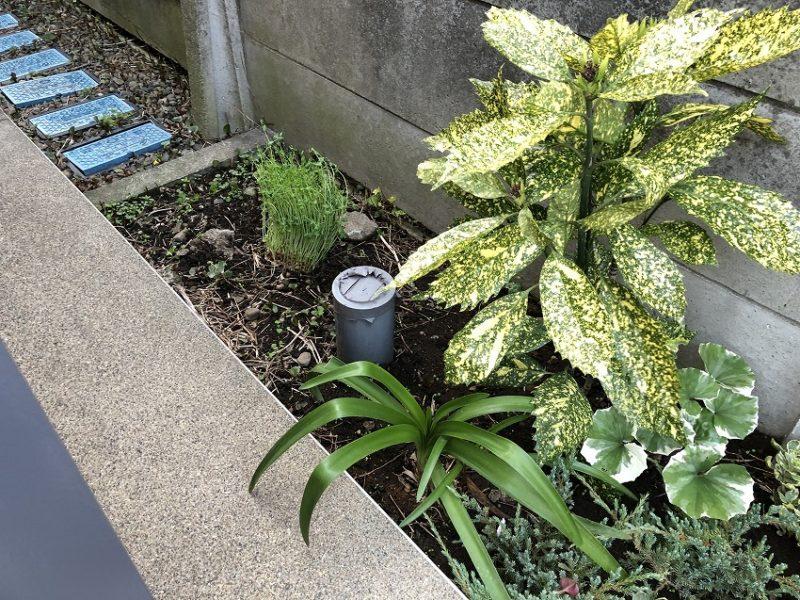 植栽の裏に見慣れない植物が見える