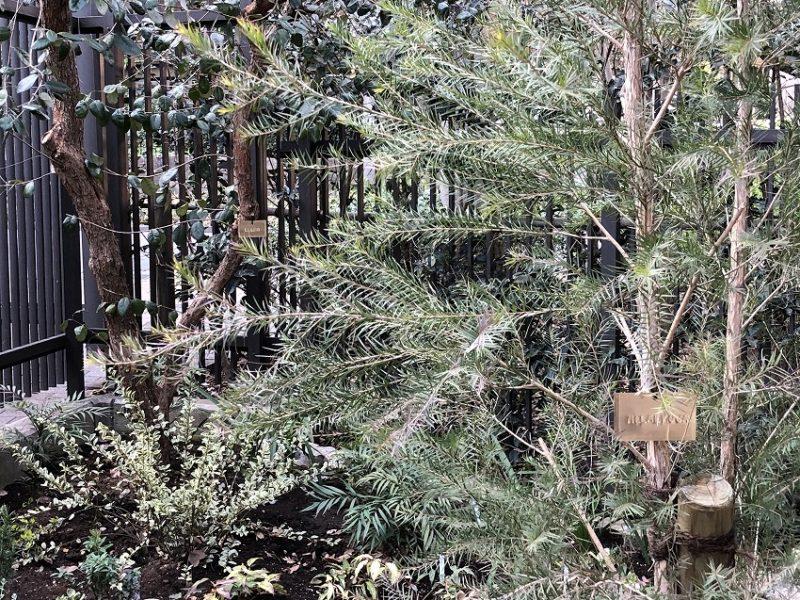 メラレウカとフェイジョアの樹木札