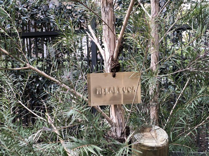 庭づくりをおこなった世田谷区の個人邸のメラレウカに真鍮製の樹木札をつける