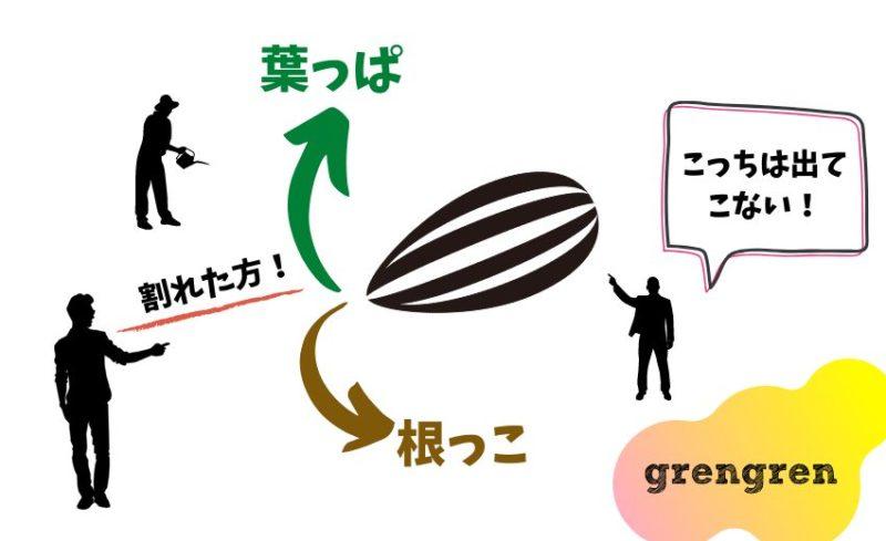 種の発芽についての説明