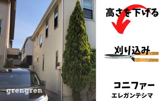 横浜市の大きなコニファーの刈り込み剪定の施工前