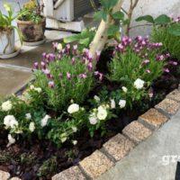 種類を限定して落ち着いた華やかさを演出した目黒区の玄関前花壇の春の植栽