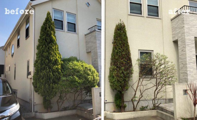 刈り込み剪定の施工前と施工後の比較