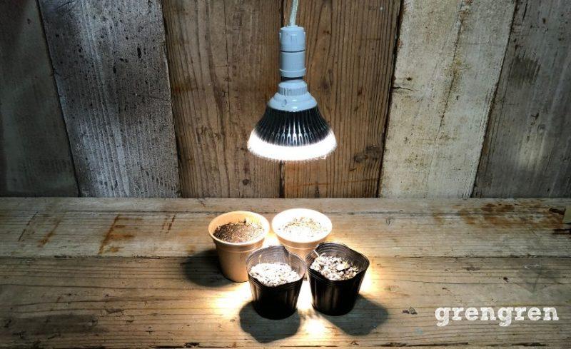 植物育成ライトで苗床の双葉の成長を促す