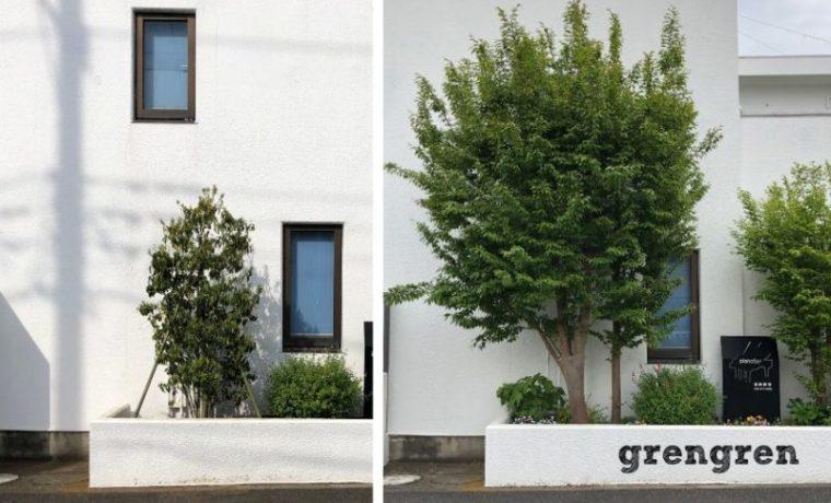横浜市青葉区の個人邸で樹木の植え替えの前後の比較
