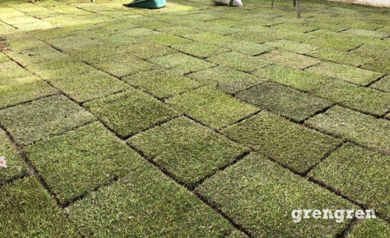 成長期の5月の綺麗な芝生TM9
