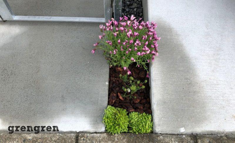 余った植物を全部植え込ん狛江市の新築住宅の植栽工事