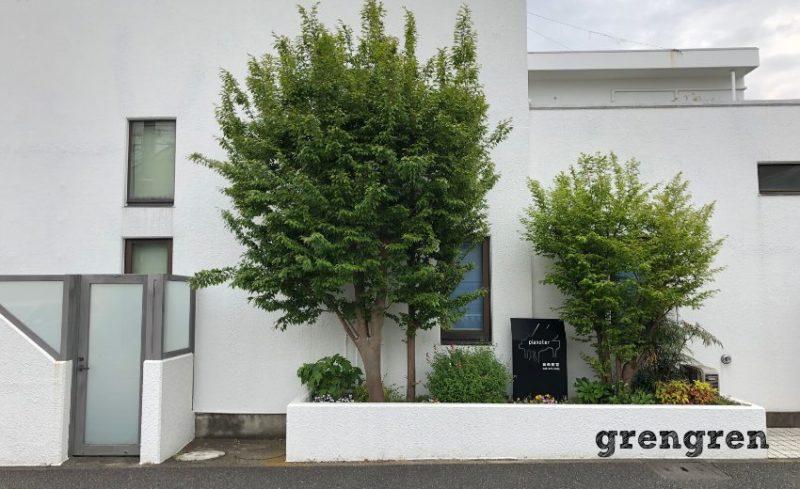 植え替え前の大きなヒメシャラの木