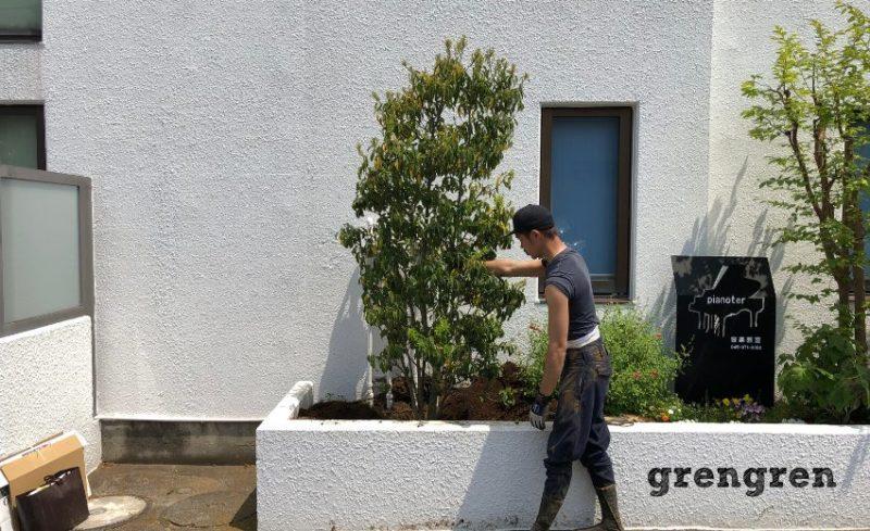ヒメシャラを抜根した後ソヨゴを植えるナチュラルガーデンの庭づくりの職人