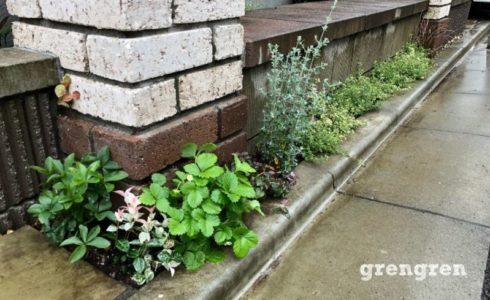 夏が来る前に行った調布市の植栽リフォーム