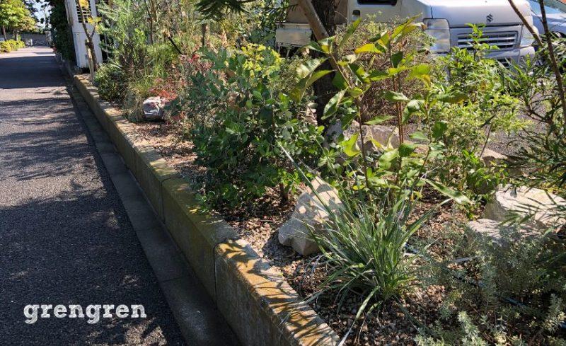 乾燥系オージープランツの植栽