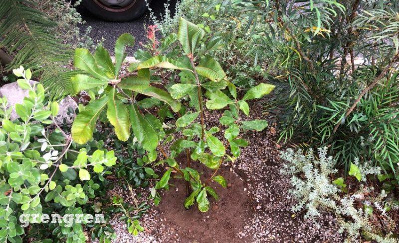 今までのお庭のテイストに合った植物で植栽工事