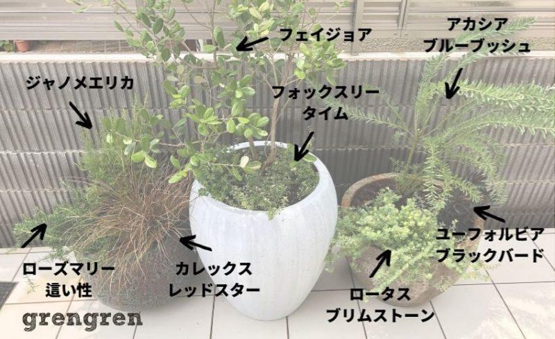 施工後に造園会社ぐりんぐりんが提供している植物の名前の画像