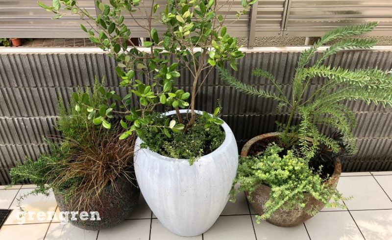 東京港区で造園会社ぐりんぐりんが施工したプランター植栽があるウェルカムガーデン