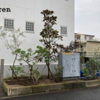 高木のタイサンボクを植栽した江東区のウェルカムガーデン