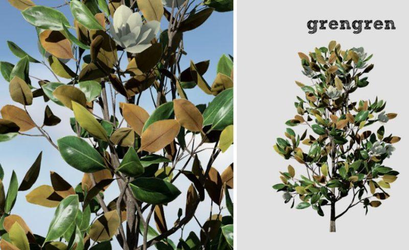 大きな葉っぱと色合いがとても素敵なタイサンボク