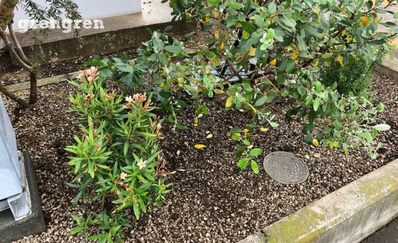 日本に昔から存在する植物と輸入されてきた植物の混植