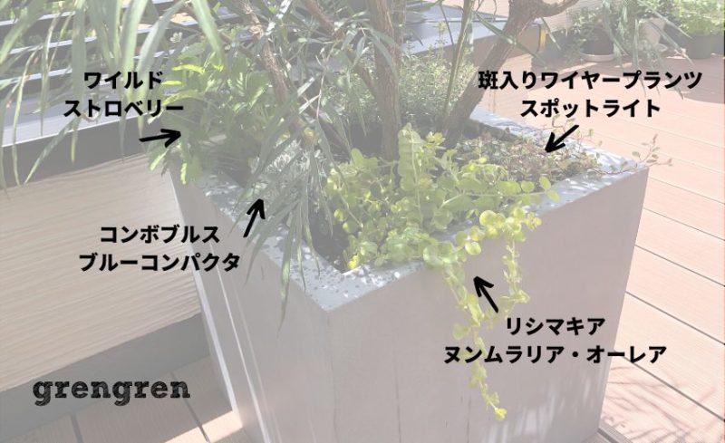 枝ぶりが多い植物の下は日陰でも育つ植物を選ぶ