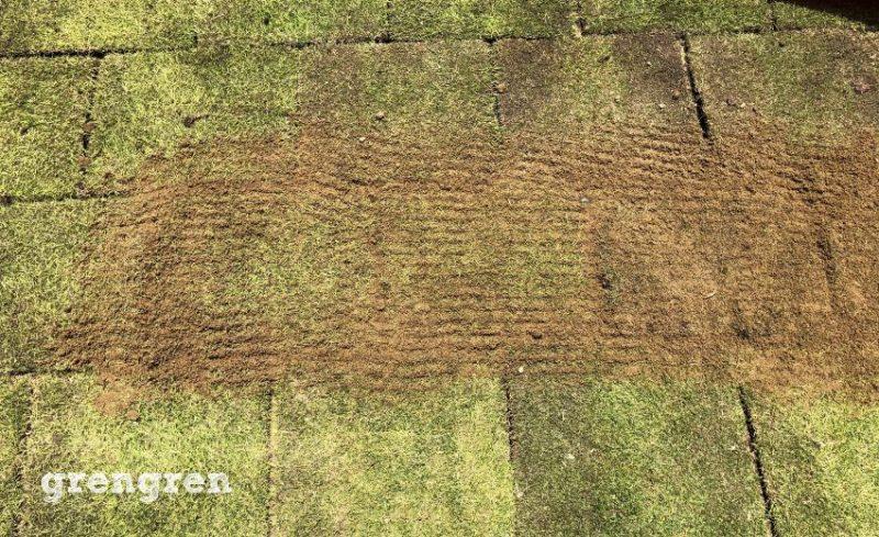 世田谷区のナチュラルガーデンの庭づくりの芝生の目地に砂をいれた作業