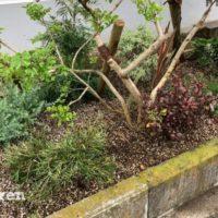 元から植えられている植物と私たちらしさの融合