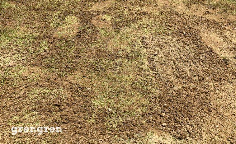 芝生の張り方の目地に砂をいれる作業