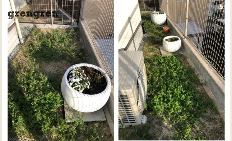 カラスノエンドウがはびこった横浜市のお庭