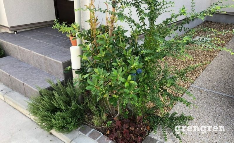 個人邸玄関前の伸び放題の乾燥に強い植物たち