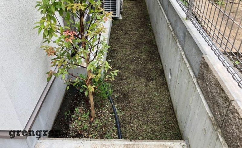 高めの芝生と雑草を草刈りで除去した横浜のお庭