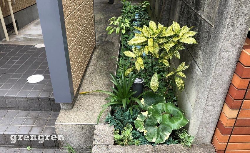 エントランスの階段を挟んだアパートの一番南側の花壇帯