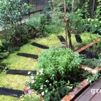 夏の剪定管理を行った世田谷ガーデンの様子
