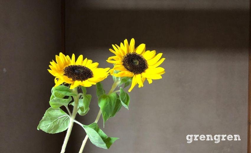小さいひまわりがとてもかわいい夏の代名詞のミニひまわり