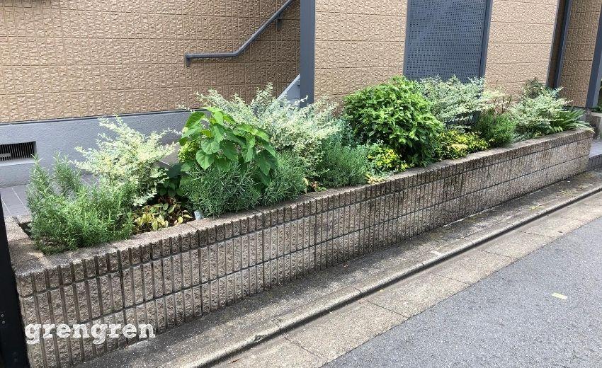 以前植栽を行った世田谷区のアパート花壇の8月の様子