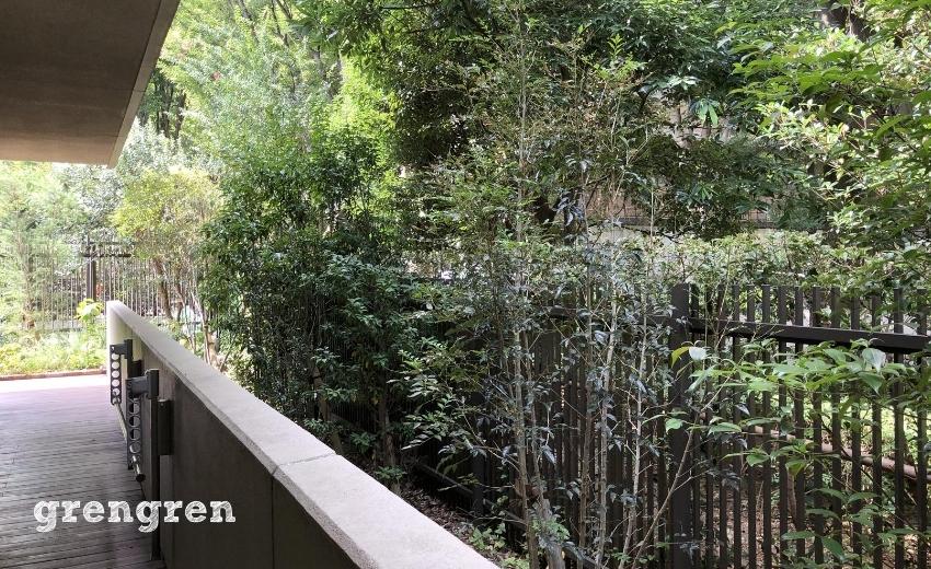 夏の世田谷ガーデンの日陰の場所の樹木の様子