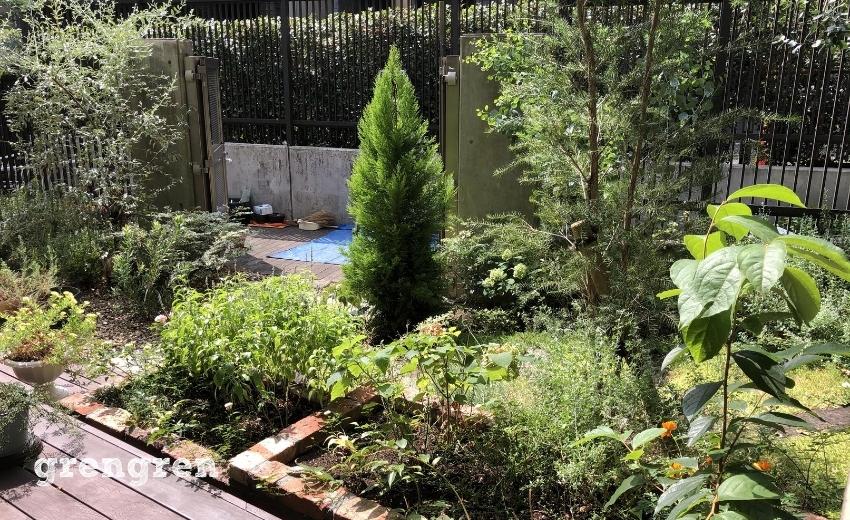 日当たりが良い場所にはオージー系の植物と樹木