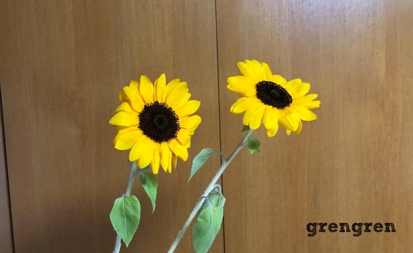 池坊の生け花の夏の花材のひとつのヒマワリ